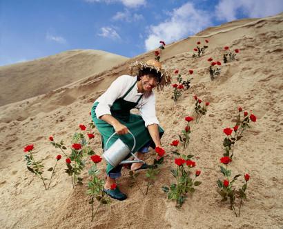 Elio Di Rupo, l'homme politique du parti socialiste pose en jardinier dans le désert avec des roses rouges.